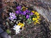 Frühling Stary
