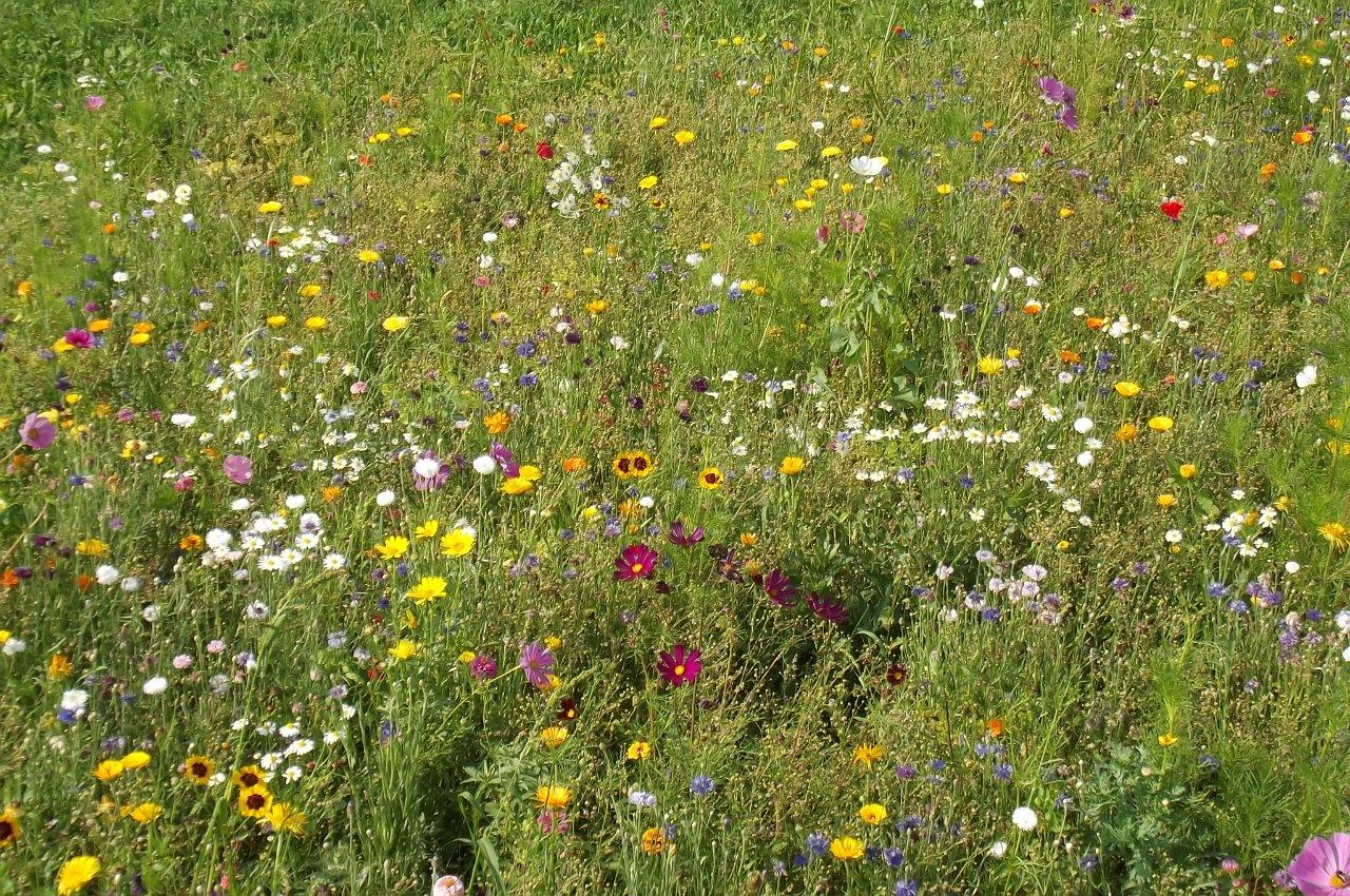 Robert Liebenauer: Blumenwiese