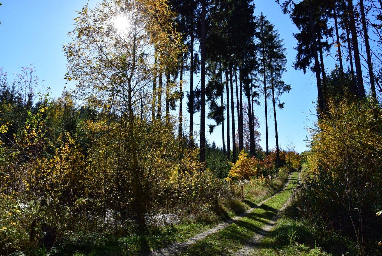 Rudi Jahn: Weg zur Steinpyramide Herbst 2017