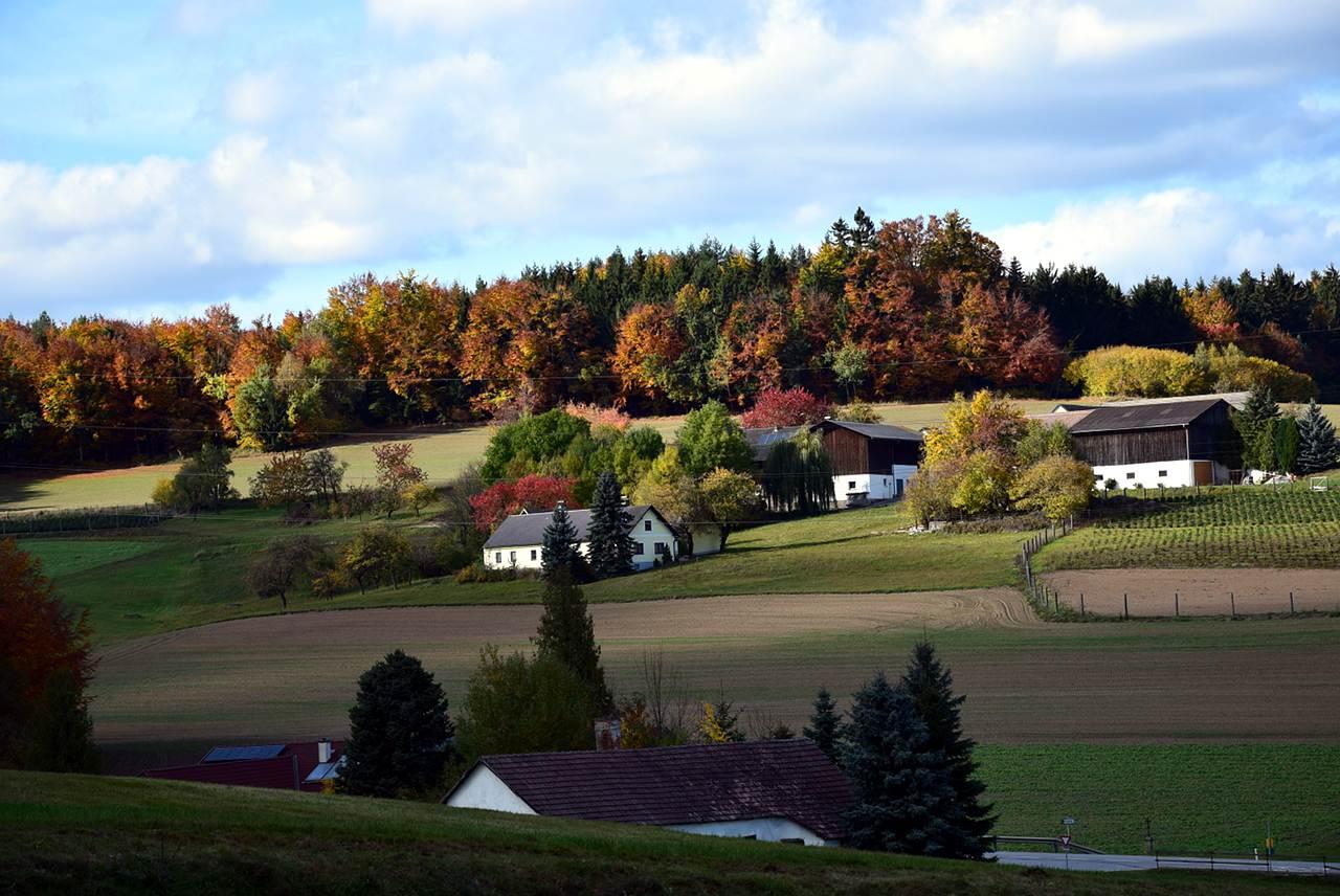 Rudi Jahn: Herbst Ober Neustift 2017