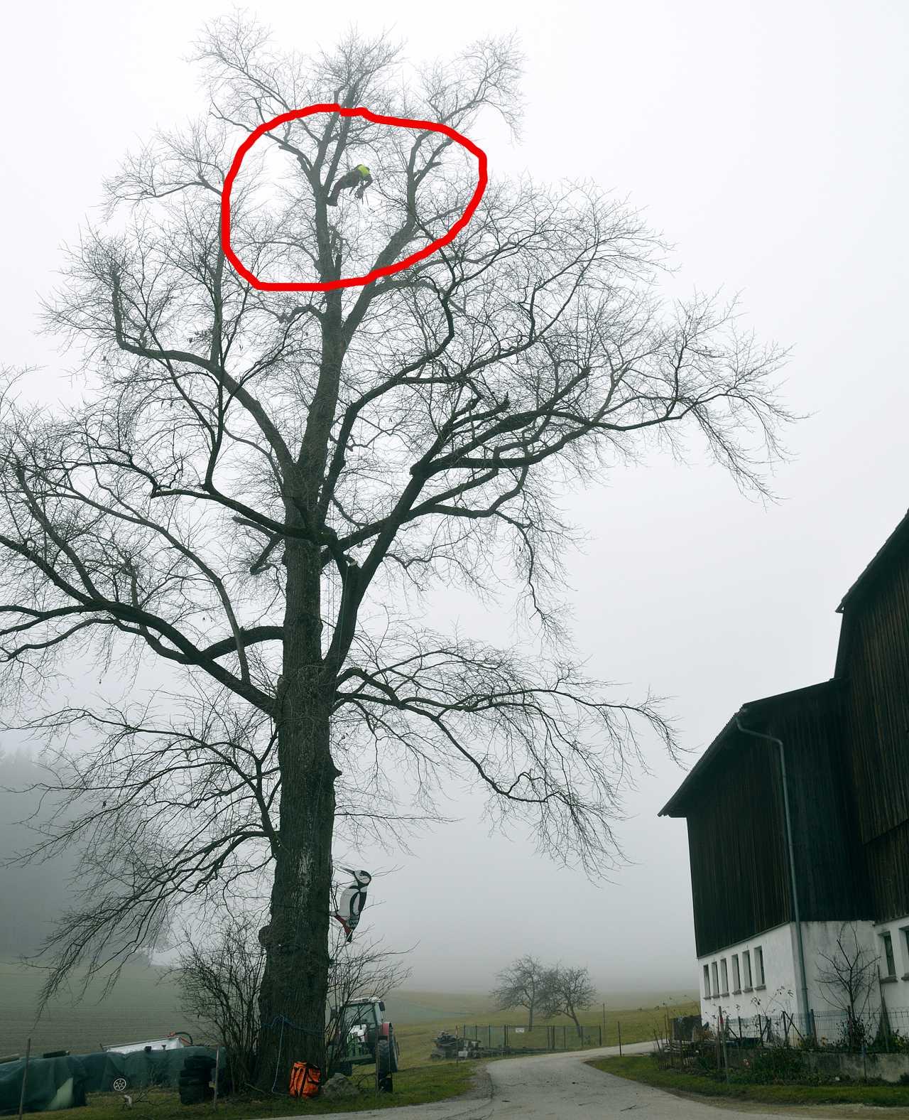 Kathy Vogl: Baumschnitt am Reithof