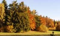 Renate Stary: Herbst Etzen 2017