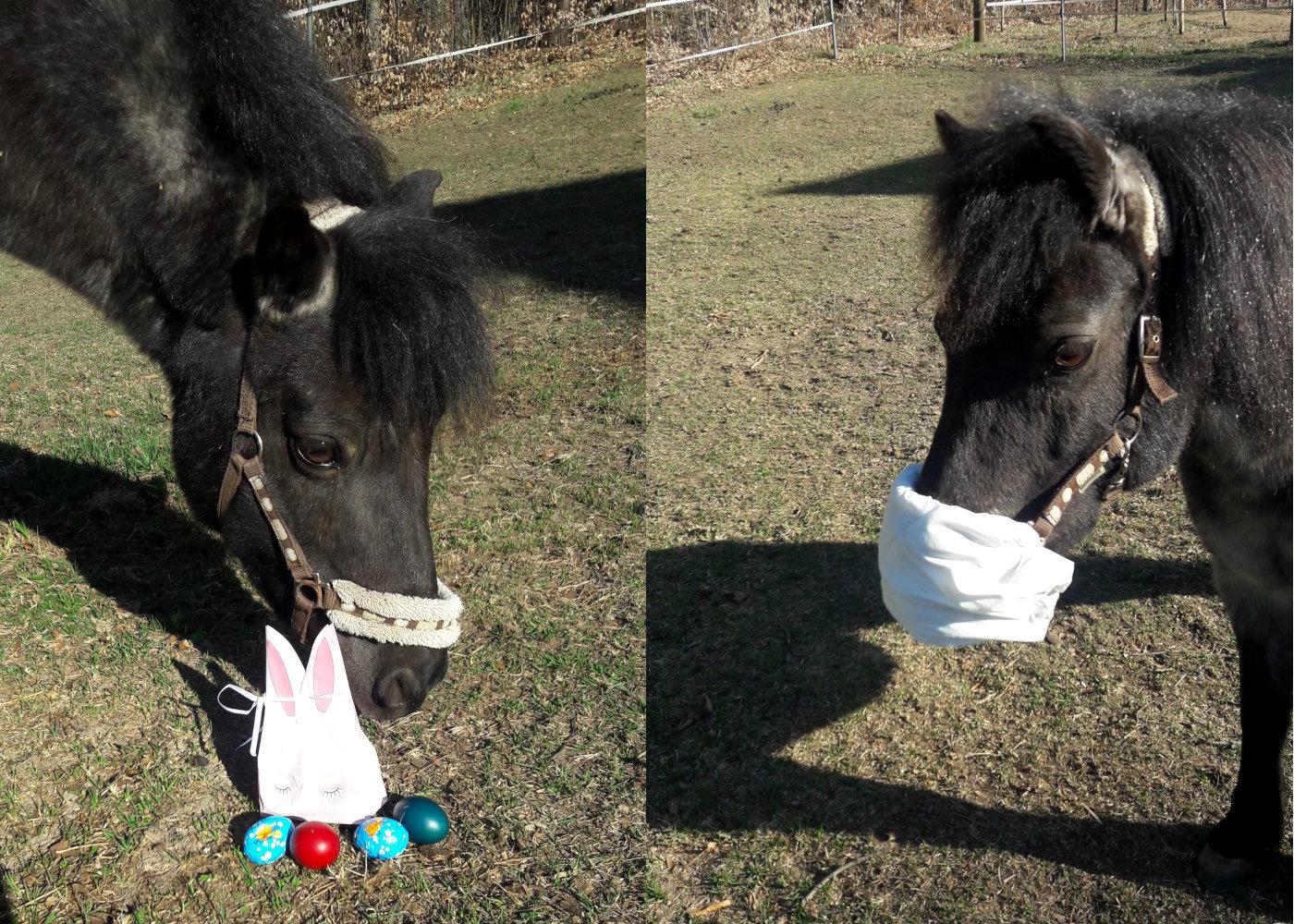 Bei den Gattringer-Pferden kam auch der Osterhase