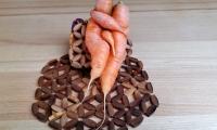 Rudi Jahn: Karotten_Wunderlinge - so entstehen Babykarotten