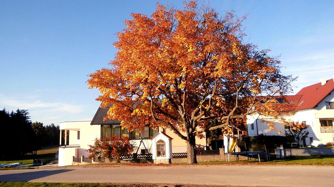 Baum Brandstätter