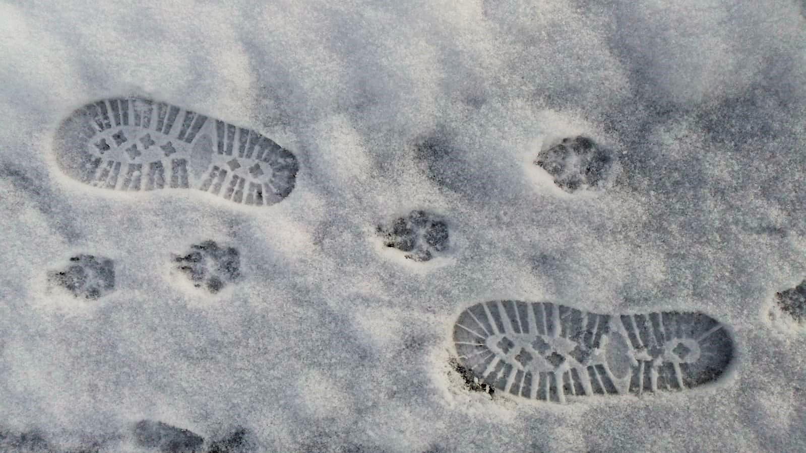 Christl Binder: Zwei Spuren im Schnee