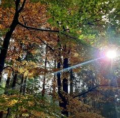 Wald_Sylvia950